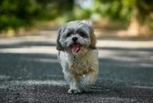 Como trazer seu cachorro para Alemanha